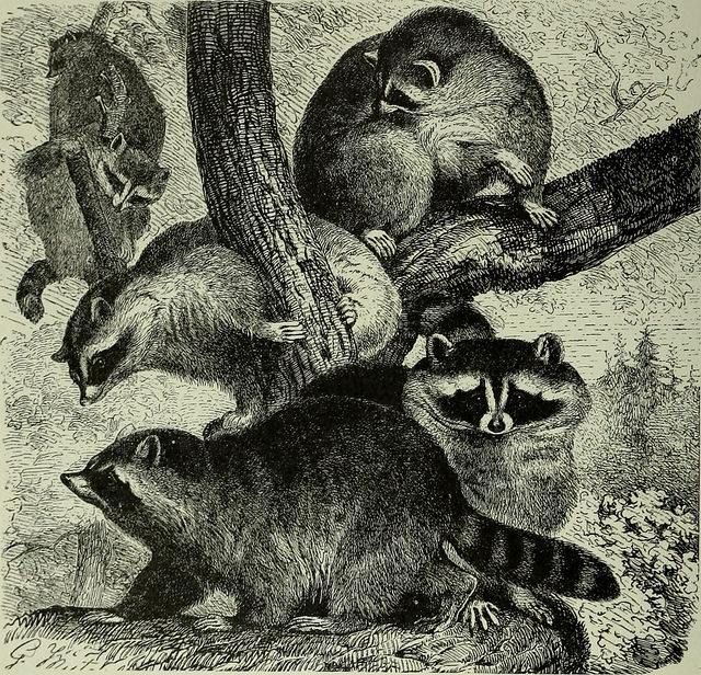 brehm's life of animals 1896